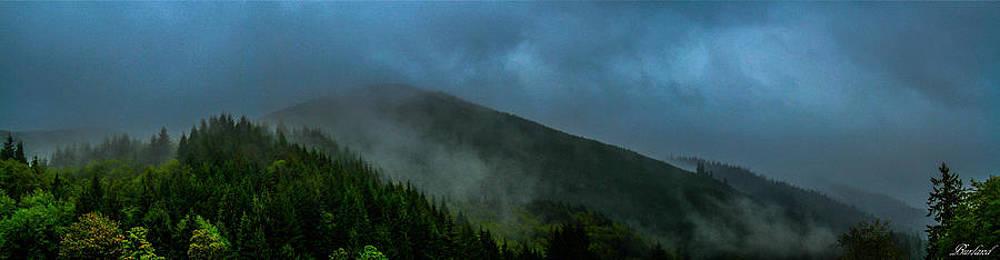 Morning Fog by Burland McCormick
