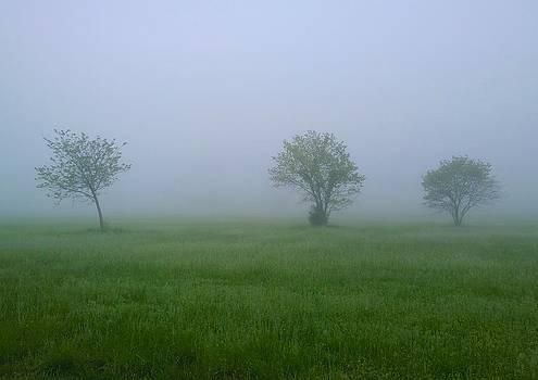 Morning Fog by Larry Bodinson