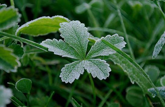 Morning frost by Marija Djedovic