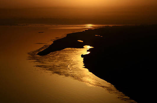 Morning Gold by Rohit Chawla
