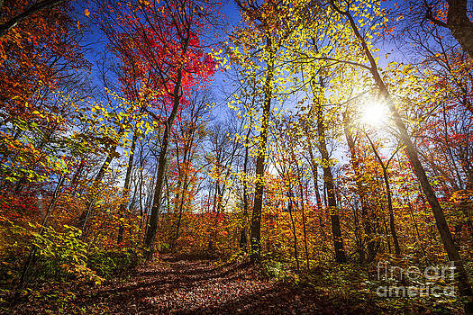 Elena Elisseeva - Morning in autumn forest