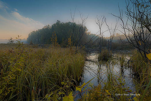 Morning in the Wetlands by Sheen Watkins