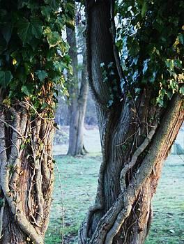 Robin Mahboeb - morning ivy