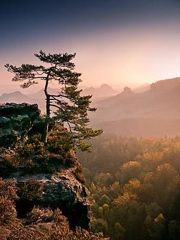 Morning Light by Andreas Wonisch