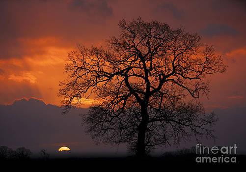 Darren Burroughs - Morning light