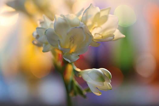 Morning Light by Etti PALITZ