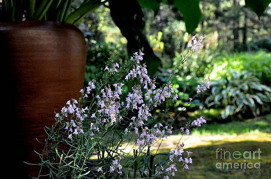 Morning Light In The Garden by Tanya  Searcy