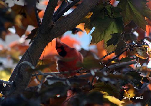 Kathy J Snow - Morning Maple Cardinal