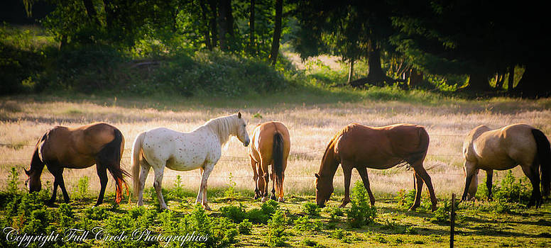 Morning Mares by Pandyce McCluer