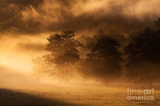 Morning Mist by Bernadett Pusztai