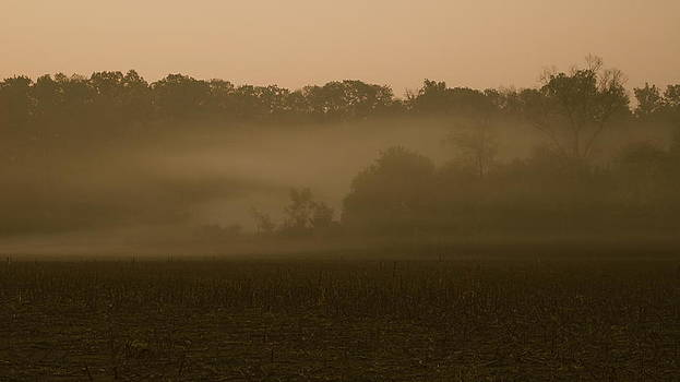 Morning Mist by Erica Keener
