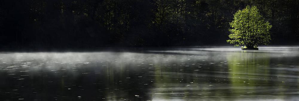 Morning mist by Henrik Petersen