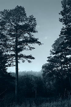 Nina Fosdick - Morning Misty Forest
