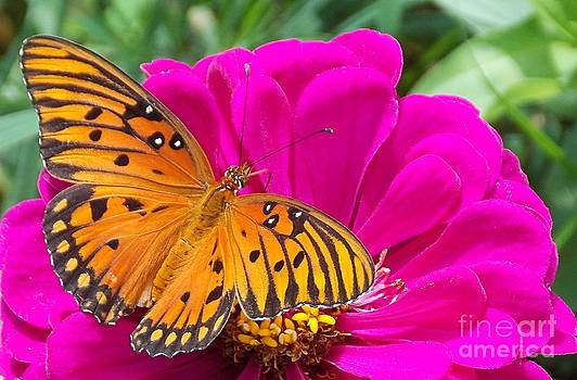Morning Monarch by Annette Allman