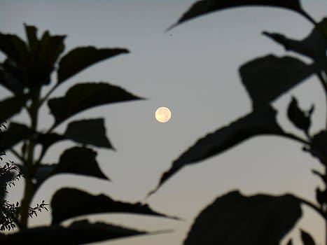 Yuriy Vekshinskiy - Morning moon