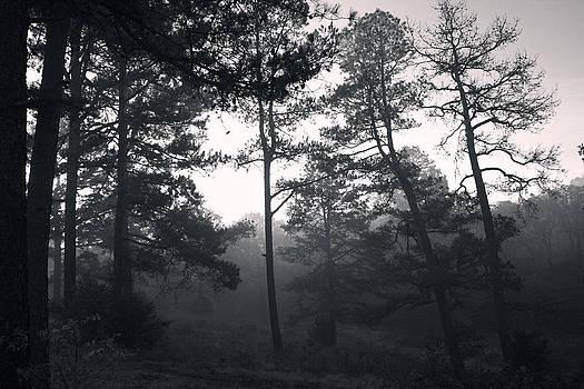 Nina Fosdick - Morning of the Mist