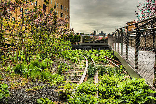 David Hahn - Morning on the High Line