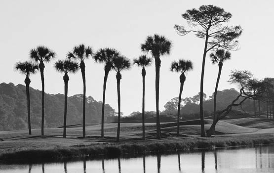 Rosanne Jordan - Morning Palms