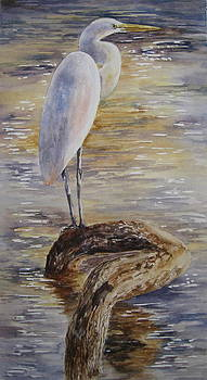 Morning Perch-Egret by Mary McCullah
