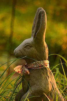 Maria Urso  - Morning Rabbit