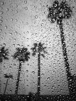 Morning Rain by Mark DeJohn