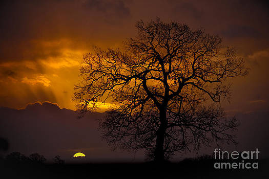 Darren Burroughs - Morning rays