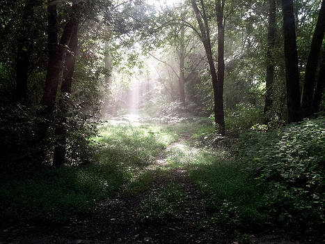 Morning Rays by Melissa Krauss