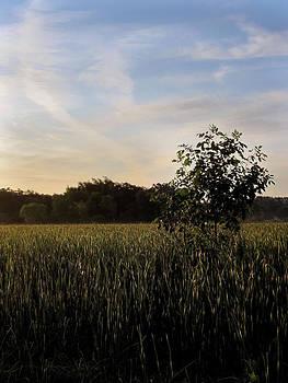 Gilbert Photography And Art - Morning Shadows on the Marsh