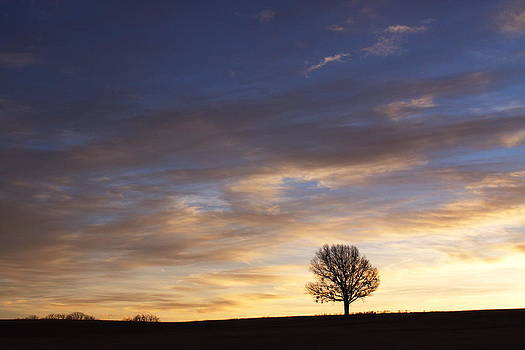 Morning Silhouette by Bryan Davis