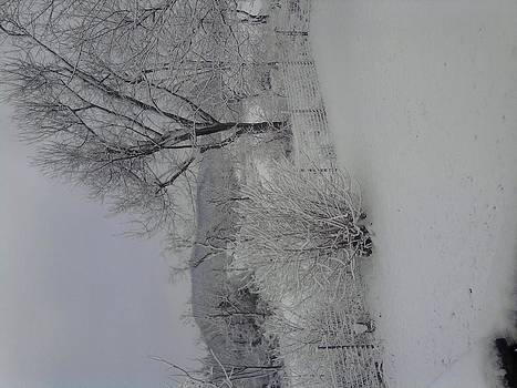 Morning Snow by Jeni Tharp