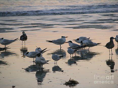 Morning Squawk With Terns 10-12-14  Julianne Felton by Julianne Felton
