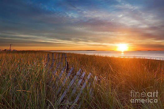 Jo Ann Snover - Morning sun on the dune grasses