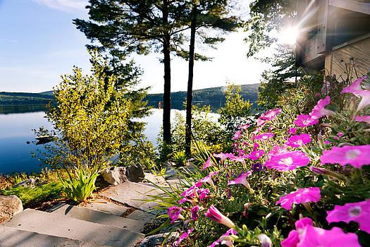 Jo Ann Snover - Morning sun on the lake