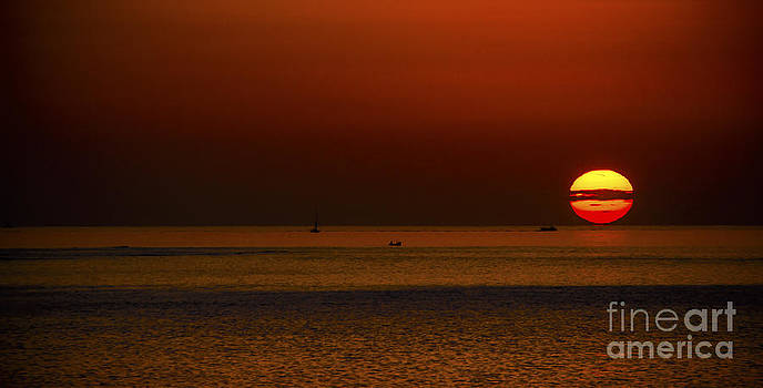 Svetlana Sewell - Morning Sun