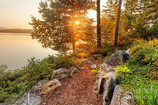 Jo Ann Snover - Morning sun through trees