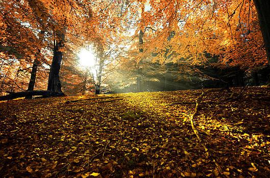 Henrik Petersen - Morning sunbeam in the forest