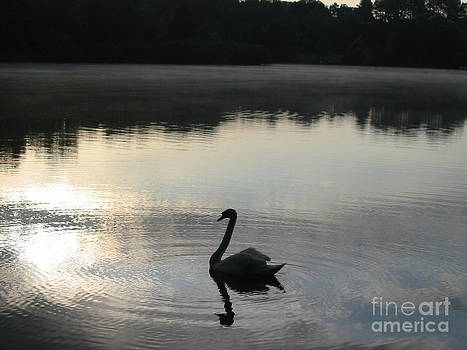 Morning Swim by Janet Moses
