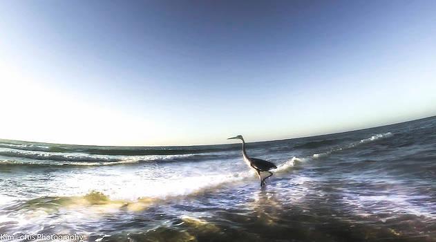 Morning Swim  by Kim Loftis