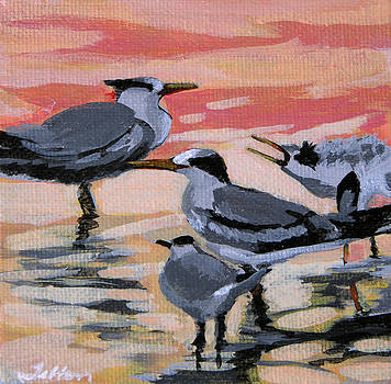 Morning terns by Julianne Felton