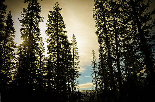 Morning through the Pines by Debbie Karnes