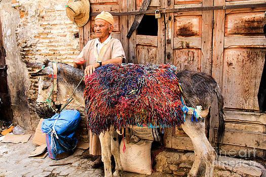 Moroccan Donkey by Jennifer Ansier