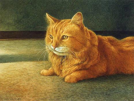 Morris by Tom Wooldridge