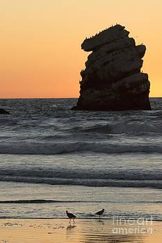 Terry Garvin - Morro Beach Sunset