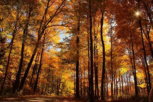 Rosanne Jordan - Morton Arboretum Dreamy Canopy of Color
