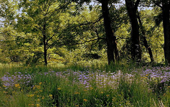 Rosanne Jordan - Morton Arboretum Summer Forest 1