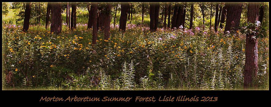 Rosanne Jordan - Morton Arboretum Summer Forest 2013