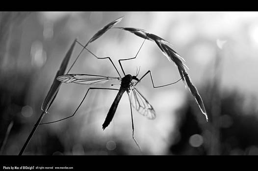 Mosquito by Mac Of BIOnighT