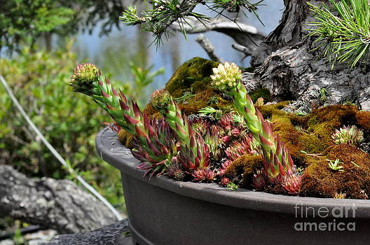 Moss and Succulents in a Brown Pot by Tanya  Searcy