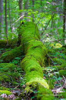 Moss Covered Tree by CJ Benson