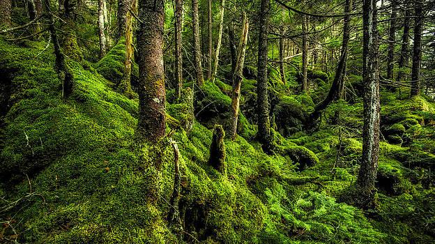 Moss Garden by Robert Clifford